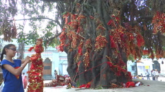Worshipping tree as a God, a culture in Indian tradition - stock footage