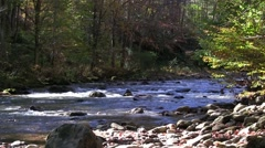 Mountain Trout Stream Stock Footage