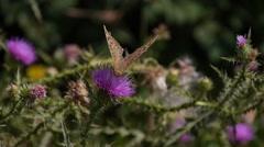 Butterfly on a flower flies away Stock Footage