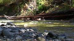Trout Stream Stock Footage