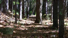 Forest trail Stock Footage