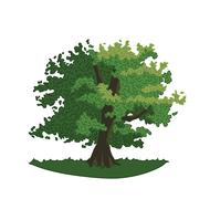 Oak with green leaves and branches. Stock Illustration