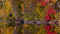 Fall Colors Wilderness Scene with Heron Bird Stock Footage