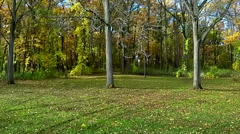 Aerial pan of the beautiful fall colors at a local park Stock Footage