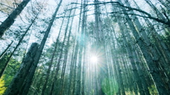 Old deep forest with shimmering sunbeams.Dolly shot into magical pristine forest Stock Footage