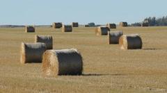 Hay bales in a field. Alberta, Canada. - stock footage