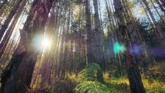 4K Magical deep forest with shimmering sunbeams - stock footage