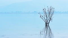 4K Blue tranquil scenery with flooded tree Stock Footage