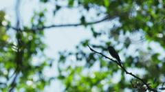 Bird on branch Stock Footage