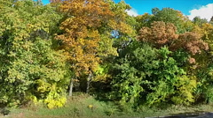 Aerial view of the fall colors in a local state park Stock Footage