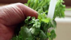Hand washing fresh cilantro under tap water from kitchen sink Stock Footage
