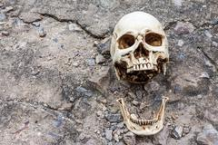 Stock Photo of human skull ,separated jaw, on crack cement street