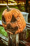 Jack O Lantern Rotting - stock photo