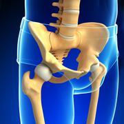 pelvic girdle artwork - stock illustration