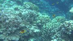 colorful fishes on reef 47 dahab - stock footage