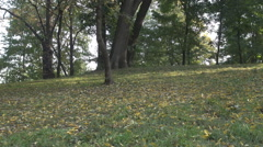 Panoramic shot, yellow leafs on green grass, fall season, plenty light in forest - stock footage