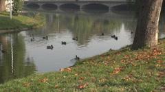 Unique autumn landscape, ducks swim on lake, bridge clear reflection in water Stock Footage