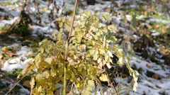Yellow dry bush of a grass on a wind Stock Footage