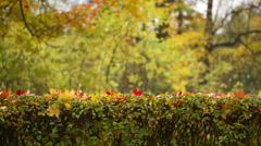 autumn background in town park - stock footage