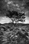 Solitary tree on mountain and footpath landscape in monochrome Stock Photos