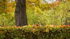 autumn background from town park - stock footage