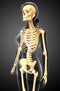 human skeleton side view - stock illustration
