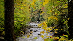 Autumn leaves rocky river background Stock Footage