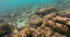 Reef with fish, coral and plankton Stock Footage