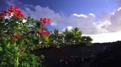 Hawaii coast, encroaching into lava field Stock Footage