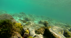 A view of the rocky bottom and coral near the United States Virgin Islands - stock footage