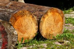 cracked felled trees - stock photo