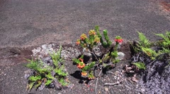 Kilauea, new crater life Stock Footage