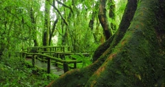Hiking trail in deep green forest with mossy trees and wild plants tracking shot Stock Footage