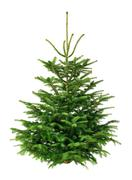 perfect fir tree on pure white - stock photo