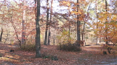 Stock Video Footage of Drops a lot of multicolored leaves from the trees in autumn forest