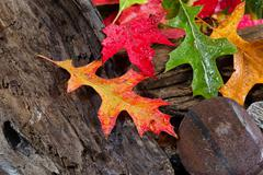 wet vibrant autumn leaves on driftwood - stock photo