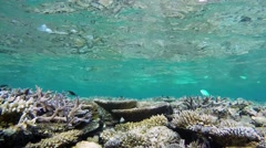 Maldives underwater atoll coral reef during diving - stock footage