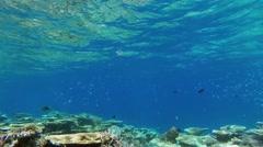 Maldives underwater coral garden Stock Footage
