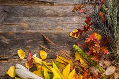 Dry stalks and leaves fall background Stock Photos