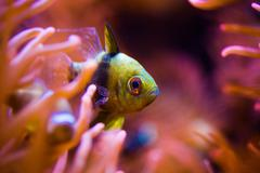Tropical fish and the reef closeup photo. Stock Photos