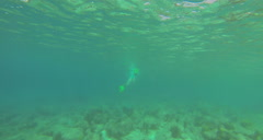 Stock Video Footage of snorkler bottom and surface from below