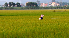 Stock Video Footage of farmers spray pesticides for rice