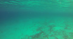 Snorkling in waterlemon cay Stock Footage