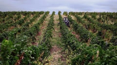 Stock Video Footage of people gather grapes and tractor