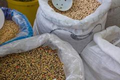 bird seed in bulk - stock photo
