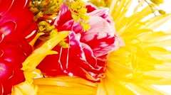 Flowers in bouquet isolated over white Stock Footage