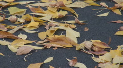 Panoramic shot dead golden brown yellow leaves carpet falling on the ground park Stock Footage