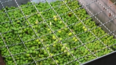 Olives being processed in mill Stock Footage