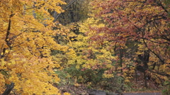 Forest watercourse at autumn season with wild ducks on water Stock Footage