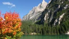 Autumn in dolomites alps lake prags pan wide 11531 Stock Footage